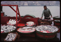 Fish market-Golden Horn