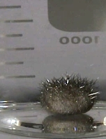 In a flask, a lump of silver metal with spikes growing out of it.
